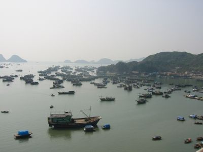 Photo of boats in Cat Ba harbor